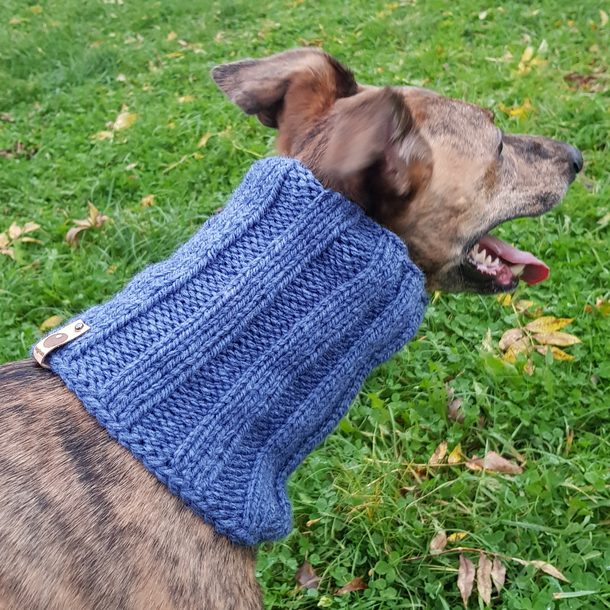 DOG SNOODS (HAND KNITTED) - An Englishman in Moravia